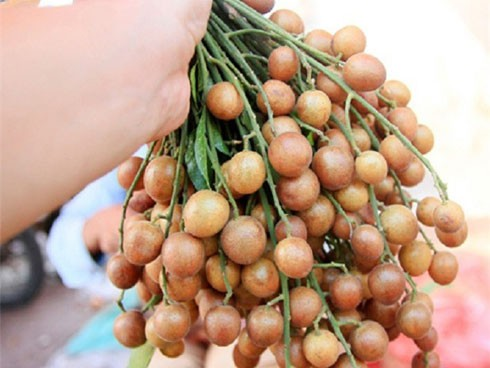 Quất hồng bì thứ quả ăn vặt và là vị thuốc