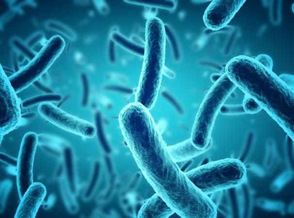 Lợi khuẩn (probiotic) trong đường ruột có rất nhiều lợi ích cho sức khỏe