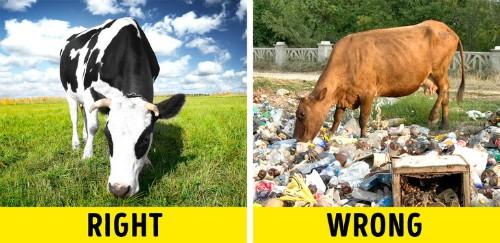 Cố gắng tìm hiểu những gì con vật ăn vào. Bạn sẽ nhận được thông tin này khi quan sát thịt, hỏi người bán, hoặc xem trên bao bì. Các đầu bếp đều nhất trí rằng con bò ăn cỏ cho hương vị tuyệt vời nhất.