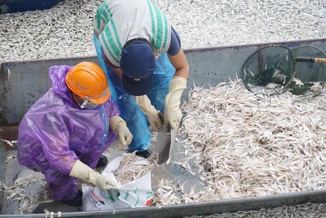 Tình trạng cá chết xảy ra cùng thời điểm nắng nóng kéo dài, khi cá chết với khối lượng lớn cũng là thời điểm mưa giông, kết thúc đợt nắng nóng.