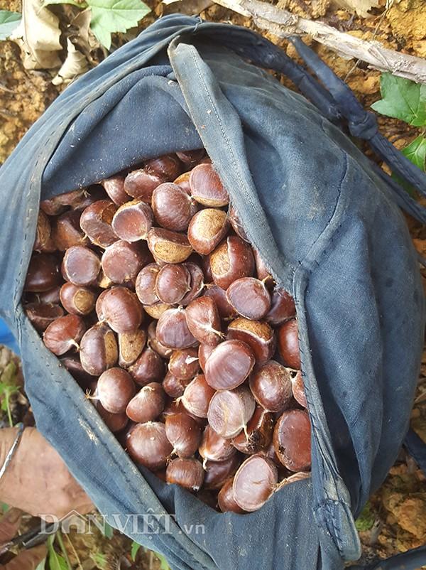 Muốn ăn hạt dẻ dẻo mềm và dậy mùi thơm chỉ cần rang nhỏ lửa, đều tay cho tới khi hạt dẻ cười lộ lớp nhân màu vàng ươm.