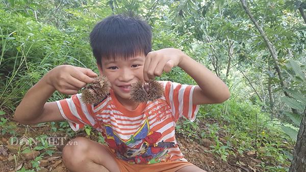 Vào những ngày nghỉ học, các em nhỏ theo người lớn vào vườn nhặt hạt dẻ thuê. Một cậu bé khoe chiến lợi phẩm của mình.