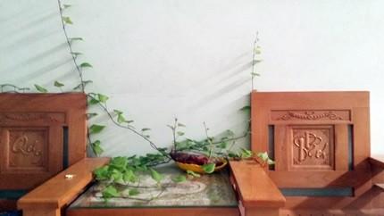 Củ khoai lang nhà chị Ngọc Dung (Hải Phòng) mọc dây leo khắp nhà. Chị sau đó đã phải cuộn lại các ngọn cho gọn gàng hơn.