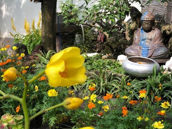 Xen kẽ là các loài hoa lan và hoa cúc nở quanh năm