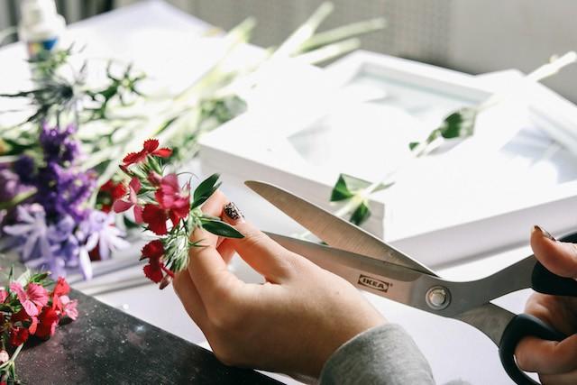 Bạn nên cắt hoa rời khỏi phần thân cây. Hãy làm cẩn thận và cố gắng giữ cho hoa còn nguyên vẹn. Đừng quên có một số loại hoa rất mỏng manh, dễ rơi rụng nên bạn cần hết sức chú ý.