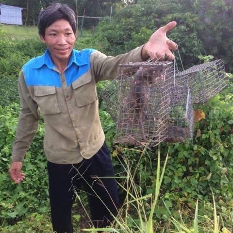 Chỉ vài tiếng đồng hồ, thợ săn có thêm nguồn thu nhập từ việc bán chuột