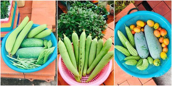 Mùa nào thức đó, vườn rau đã cung cấp thực phẩm sạch quanh năm cho gia đình anh Thanh.