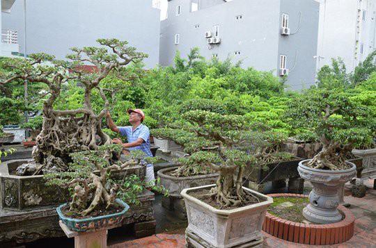 Một góc trong 9 vườn cây của Thoan