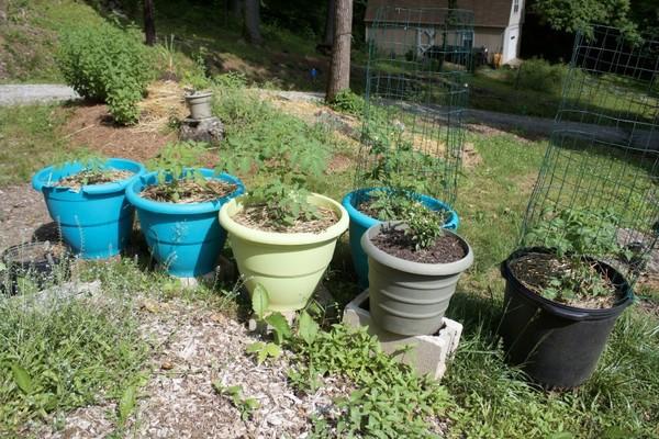 Trồng cây vào chậu hoặc thùng xốp là lựa chọn của nhiều người sống ở các khu đô thị chật hẹp.