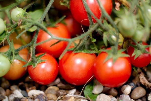 Chúc bạn sớm thu hoạch được những loại rau quả sạch cho gia đình như thế này.