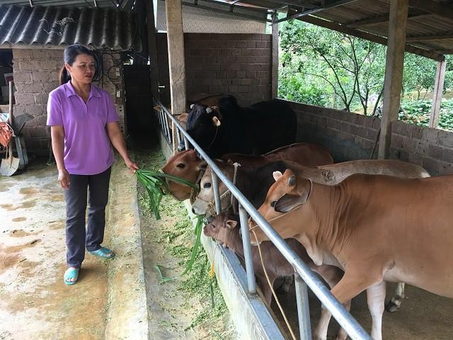 Đàn bò của bà Khánh luôn được vỗ béo và phát triển tốt.