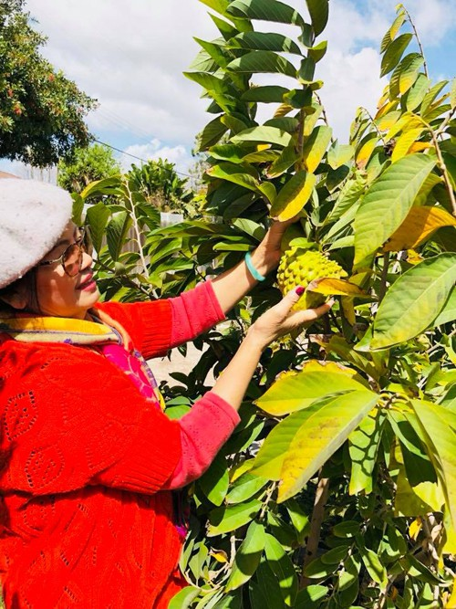 Khu vườn rộng 600 m2 của Bằng Kiều nằm ở bang California, trồng đủ loại cây trái thuần Việt như ổi, bưởi, táo ta, khế ngọt...