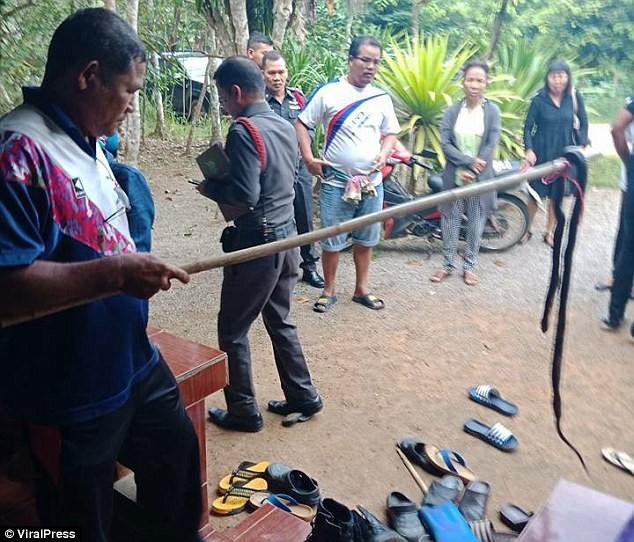 <br /> Đây là con rắn gây ra cái chết của cô bé 9 tuổi.<br />
