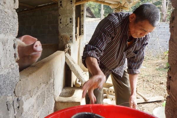Dù con trai là danh thủ nhưng cuộc sống của gia đình ông vẫn vất vả như bao gia đình ở nông thôn khác. Ông bà Khánh vẫn nuôi lợn, trồng rau và coi đây là kinh tế chủ lực của gia đình. Ảnh Zing