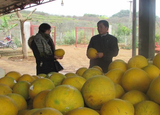 Ông Dũng đang giới thiệu chất lượng hoa quả cho khách du lịch đến tham quan và trải nghiệm tại trang trại
