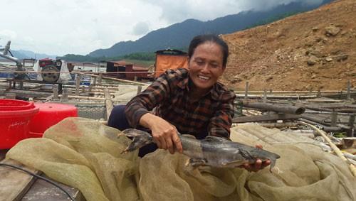 Chị Phương đã thành công khi nuôi cá chiên trên lòng hồ thủy điện Hòa Bình. Ảnh: X.T