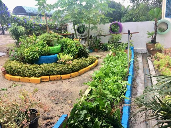 Một góc vườn trồng rau sạch của trường Ella.