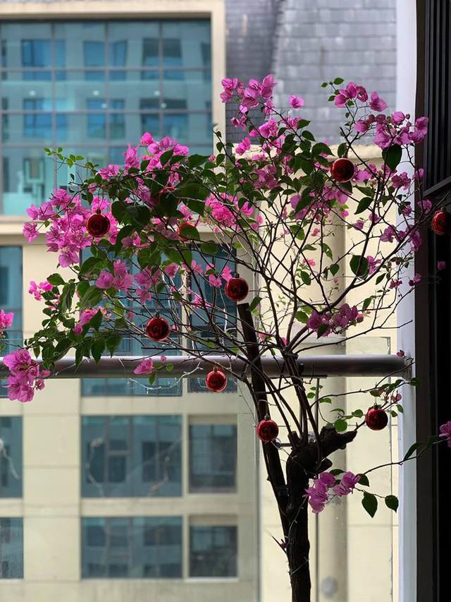Cây hoa giấy nở rực rỡ ở ban công