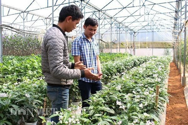 Mặc dù còn khoảng 30 ngày nữa mới đến Tết nhưng khách hàng đã đặt mua 70% số chậu dưa pepino mà anh Định có. Ảnh: Văn Long.