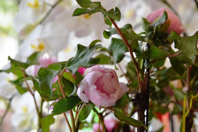 Ngoài những loài hoa được phổ biến dùng trong ngày Tết truyền thống như hoa cúc, đào, mai hay lan hồ điệp, địa lan… thì thị trường hoa Tết đặc biệt có sự xuất hiện của loài hoa mẫu đơn trồng chậu nhập khẩu.
