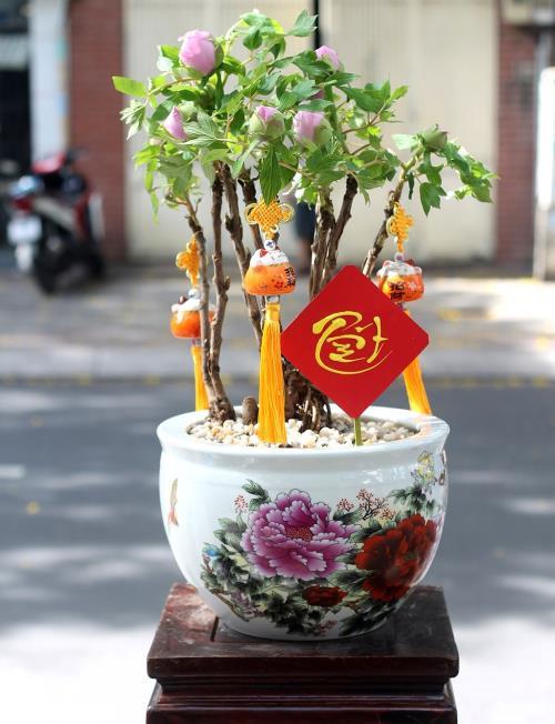 Hoa mẫu đơn có nguồn gốc ôn đới nên muốn phát triển tốt tại Việt Nam phải trồng và chăm sóc đúng kỹ thuật.