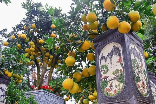 ' Bưởi bonsai cỡ nhỏ có giá bán dao động từ 3 triệu đồng tới 20 triệu đồng một cây, có cây còn đắt hơn nữa. Mỗi cây bưởi bonsai giá bán đắt rẻ dựa trên nhiều yếu tố, chủ yếu là dựa vào cây nhiều quả và dáng cây. '