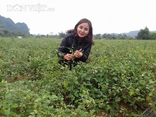 Hotgirl Bùi Thị Kiều Dung kiếm hơn chục triệu mỗi tháng nhờ trồng 5000m2 cây dại.