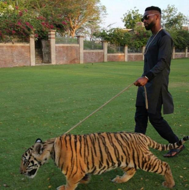 Tinie Tempah - cậu ấm nổi tiếng xứ Dubai, dắt hổ cưng đi dạo quanh khu vườn. Thú cưng của các rich kid Dubai nhất định phải là động vật quý hiếm.