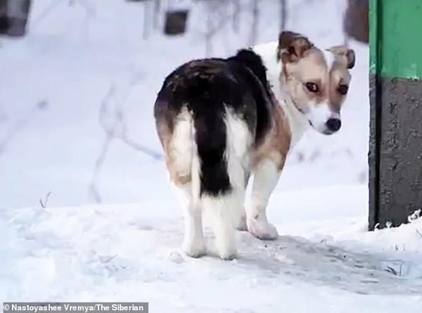 Chú chó Hachiko đợi chủ trong thời tiết giá rét đến âm 30 độ C khiến ai cũng xúc động.