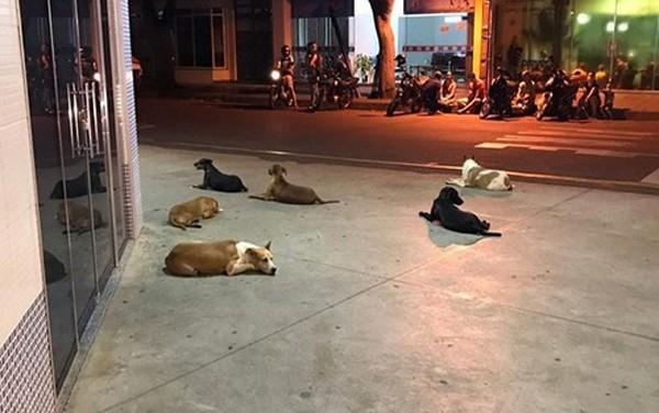 Xúc động cảnh 6 chú chó nằm đợi chủ.