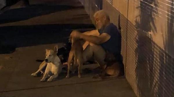 Chúng sống quây quần bên cạnh ông Luiz trên đường phố.