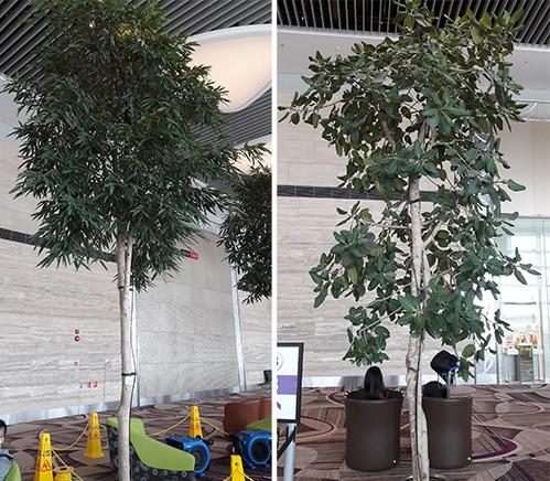 Cây xanh trồng trong nhà ở Singapore đã được xử lý chống muỗi. Ảnh: Đoàn Thanh Hà.