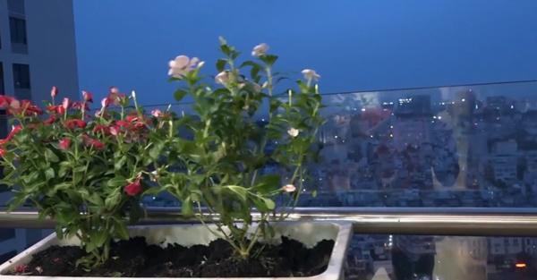 Ngoài ra, ban công vợ chồng cô cũng trồng thêm hoa để tô điểm cho căn nhà và lấy nơi thư giãn sau 1 ngày làm việc.