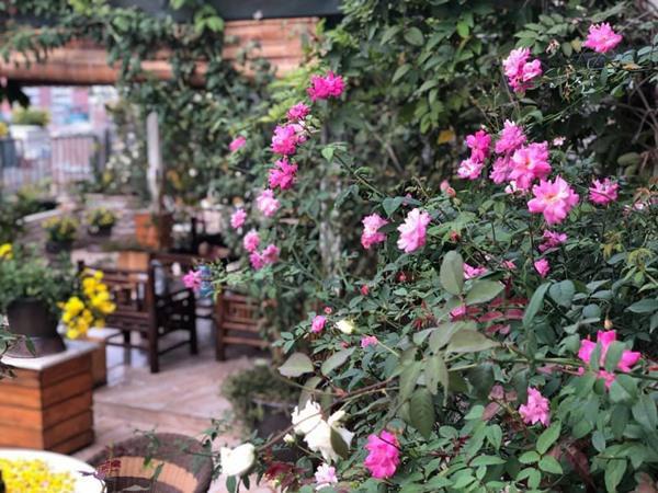 Chị Thúy chia sẻ kinh nghiệm, để có vườn hoa đẹp trên sân thượng, cần chú ý đến việc tưới nước, bón phân, chăm sóc và đặc biệt là nắng. Bởi theo chị, sân thượng thì bao nhiêu nắng, hoa sẽ đượm màu và lặp hoa bấy nhiêu.