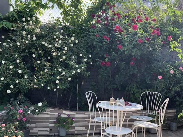 Sân thượng hoa hồng là góc thư giãn yêu thích của cả gia đình chị.