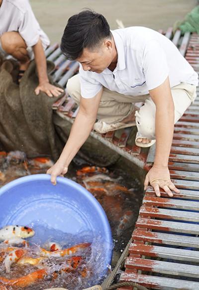 Anh bán cá Koi thành triệu phú sau 3 lần mất trắng - Ảnh 1.