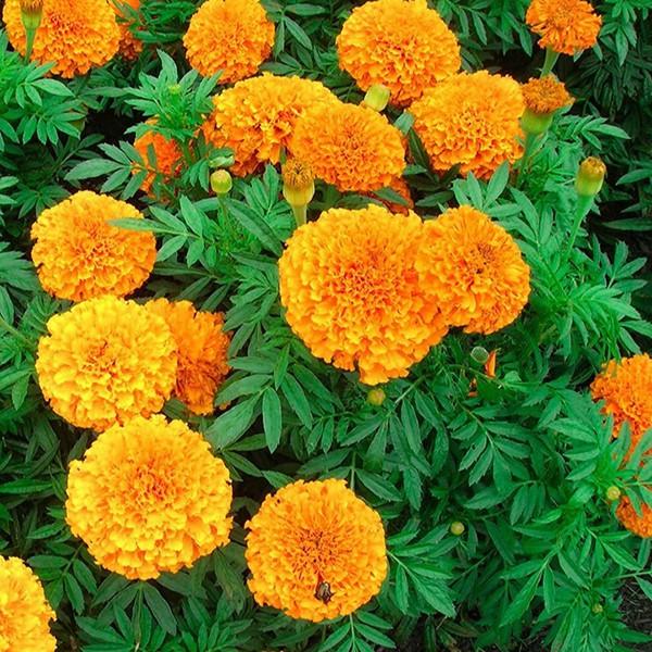 Mách bạn 10 loại cây cảnh trồng quanh nhà có khả năng xua đuổi kiến ba khoang hiệu quả - Ảnh 16.