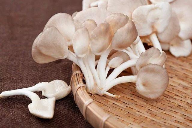 5 loại nấm tốt nhất cho sức khỏe ngừa chất gây ung thư loại 1, giúp trẻ thông minh hơn  - Ảnh 2.
