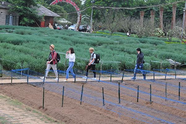 Giới trẻ chen chân chụp ảnh tại vườn cúc họa mi nở sớm nhất Hà Nội - Ảnh 10.