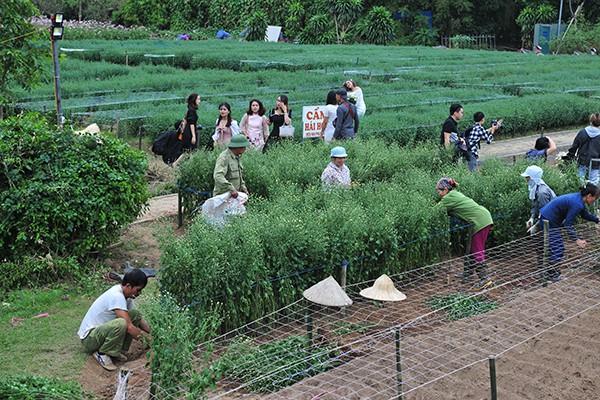 Giới trẻ chen chân chụp ảnh tại vườn cúc họa mi nở sớm nhất Hà Nội - Ảnh 9.
