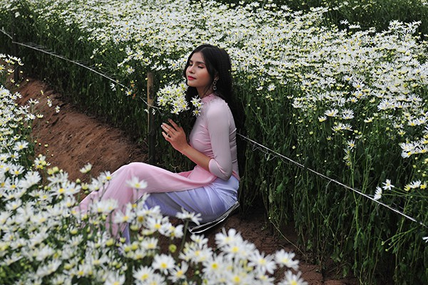 Giới trẻ chen chân chụp ảnh tại vườn cúc họa mi nở sớm nhất Hà Nội - Ảnh 4.