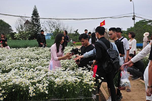 Giới trẻ chen chân chụp ảnh tại vườn cúc họa mi nở sớm nhất Hà Nội - Ảnh 2.
