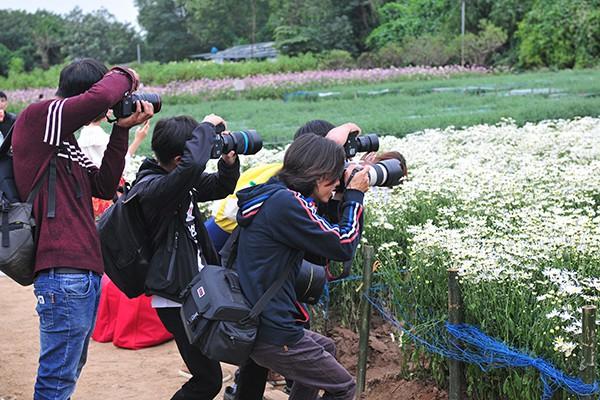 Giới trẻ chen chân chụp ảnh tại vườn cúc họa mi nở sớm nhất Hà Nội - Ảnh 6.