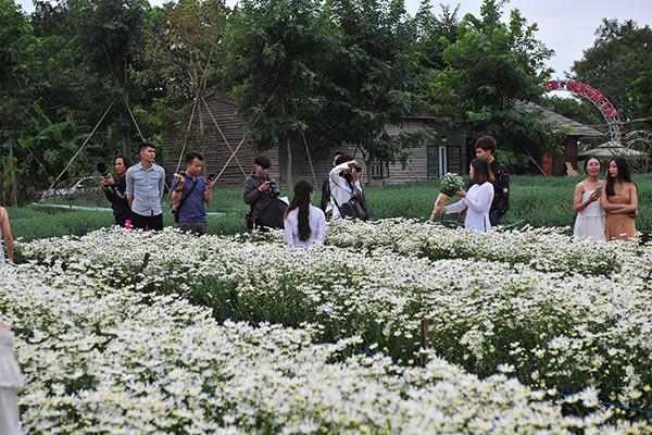 Giới trẻ chen chân chụp ảnh tại vườn cúc họa mi nở sớm nhất Hà Nội - Ảnh 5.