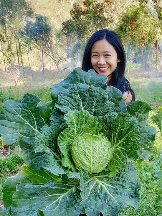Rau khổng lồ trong khu vườn Việt ở Australia  - Ảnh 9.