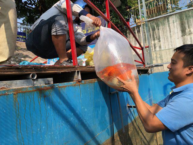 Tháo dỡ hệ thống làm sạch sông Tô Lịch, di chuyển đàn cá Koi sang Hồ Tây - Ảnh 3.