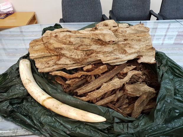 Nam hành khách mang lậu hàng chục kg ngà voi, trầm hương tại sân bay Tân Sơn Nhất - Ảnh 1.
