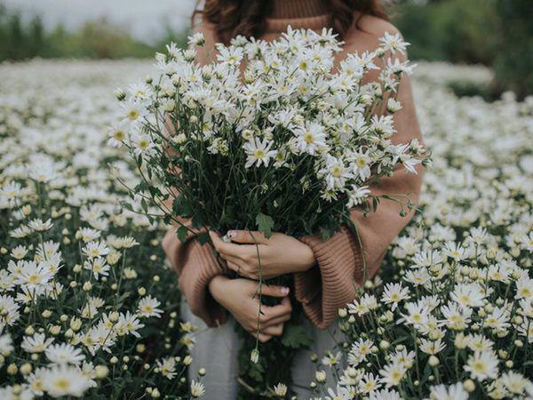 Cho 1 thìa muối vào bình hoa cúc họa mi, chơi cả tuần không thối, không hỏng, đẹp mê li - Ảnh 1.