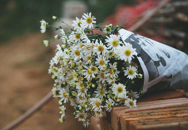 Cho 1 thìa muối vào bình hoa cúc họa mi, chơi cả tuần không thối, không hỏng, đẹp mê li - Ảnh 2.