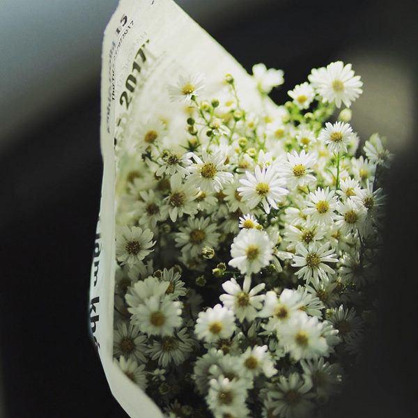 Cho 1 thìa muối vào bình hoa cúc họa mi, chơi cả tuần không thối, không hỏng, đẹp mê li - Ảnh 3.